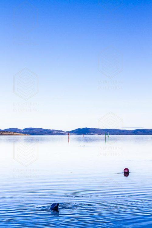 Old Sea Dogs of Tasmania Seascapes